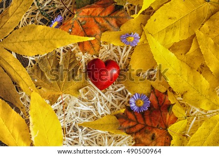 red heart and autumn leaves