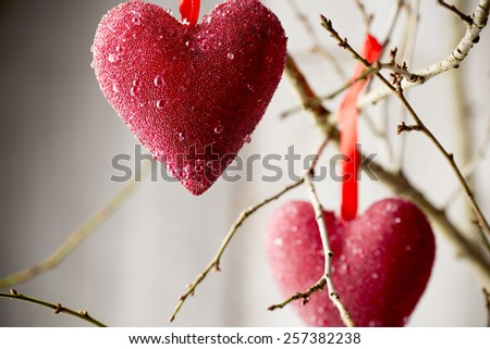 Red heart hanging on a tree branch.