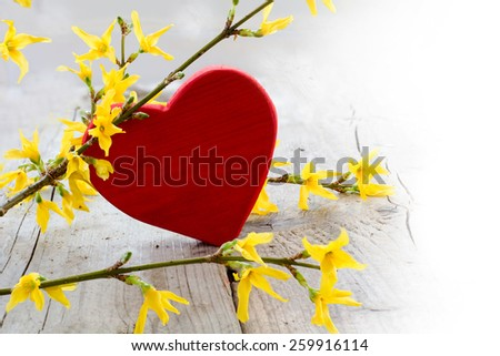 red heart shape with forsythia branch on bright wood, background blurred to white, love symbol for valentine's day or mothers day  - stock photo