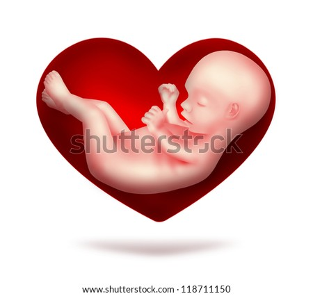 red heart with human embryo inside - stock photo