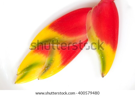 red heloconia flower isolated on white - stock photo