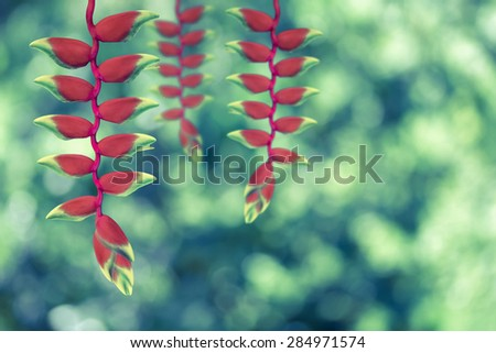 red heloconia flower on nature background -  vintage effect style - stock photo