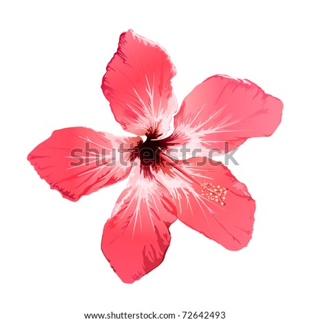 red hibiscus flower illustration on white - stock photo