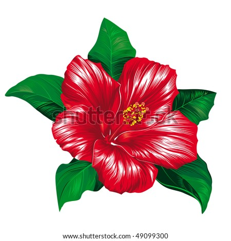 Red hibiscus flower on white background, raster version - stock photo