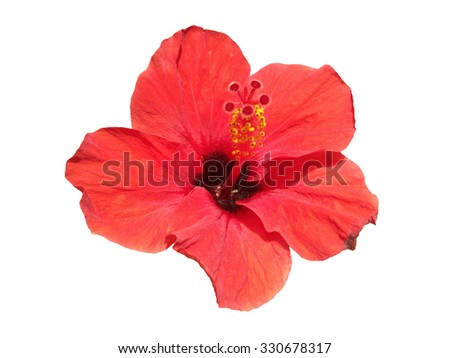Red hibiscus on a white background
