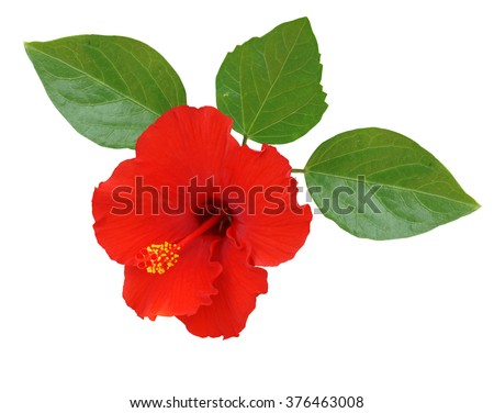 Red Hibiscus on white background with clipping path - stock photo