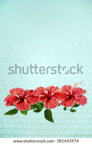 Red hibiscus that floated in the pool-1 - stock photo