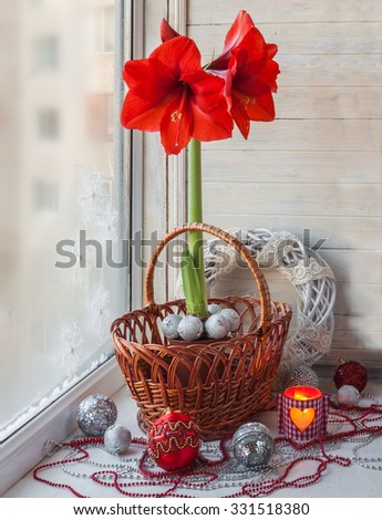 Red Hippeastrum in the window on Christmas Eve - stock photo