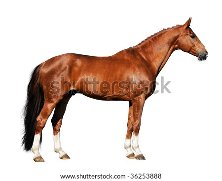red horse isolated on the white background - stock photo