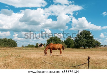 Red horse on a chain against the background of trees, yellow field and blue sky