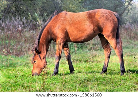 Red horse on a willow - stock photo