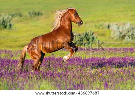 Red horse rearing up in field of flowers