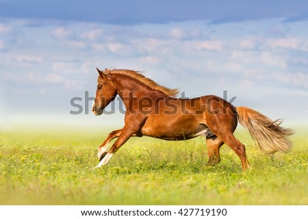 Red horse run fast in spring pasture against blue sky - stock photo
