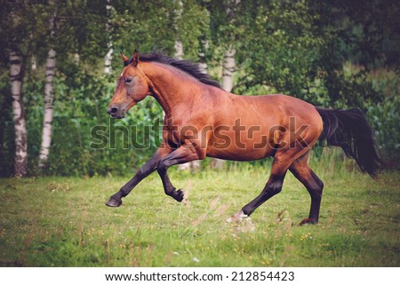 red horse running on a field