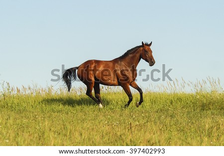 red horse standing on the dry grass in the field on a background of blue sky