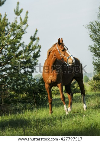 red horse with a white blaze on his head stands near green trees dressed in a blue halter