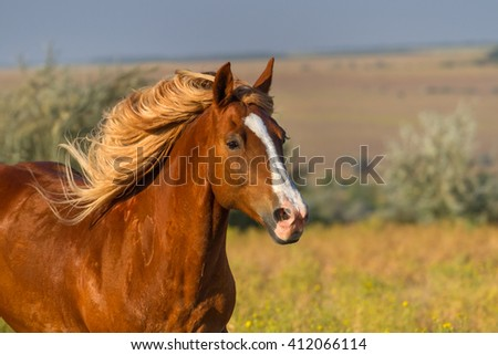Red horse with long mane portrait in motion - stock photo