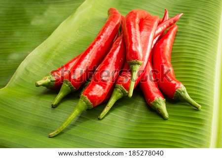 Red hot chili pepper  on a green background - stock photo