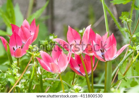 red hot, fun flower blooming spring sunny day - stock photo