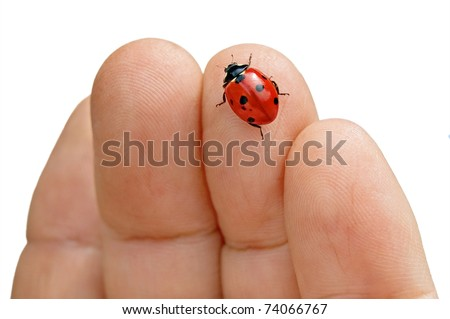 Red in black spotted ladybug in the female hand on a white background