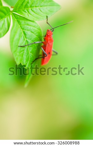 Red insect on green leaf