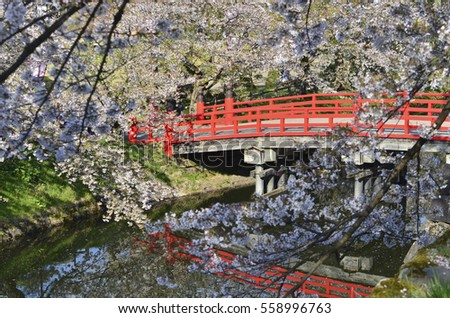 red japanese bridge and sakura tree in the garden