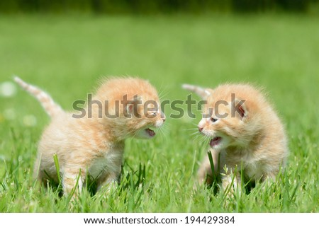 Red kitten - stock photo