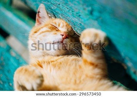 Red kitten cat sleeps on a bench in park in hot summer day - stock photo