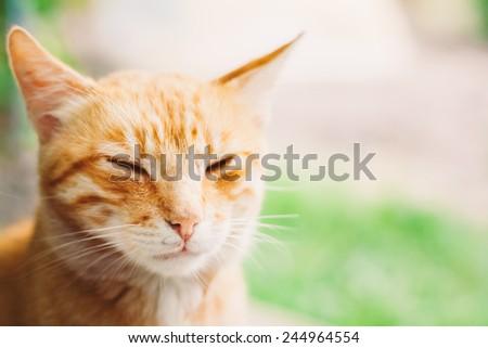 Red Kitten Cat Sleeps Outdoor In Summer Day - stock photo