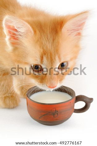 red kitten drinks milk from cup