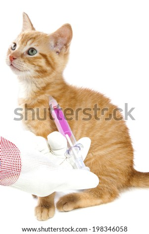 Red kitten getting a vaccine at the veterinary clinic isolated over white - stock photo