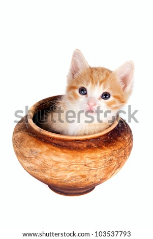 Red kitten in a clay pot on a white background