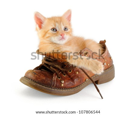 red kitten in boot, over white background - stock photo