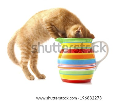 Red kitten in colorful flowerpot isolated over white