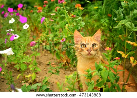 Red kitten in the flowerbed.