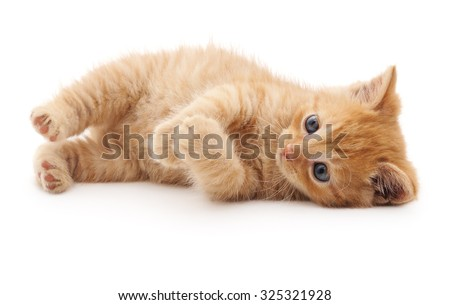 Red kitten lying isolated on a white background. - stock photo