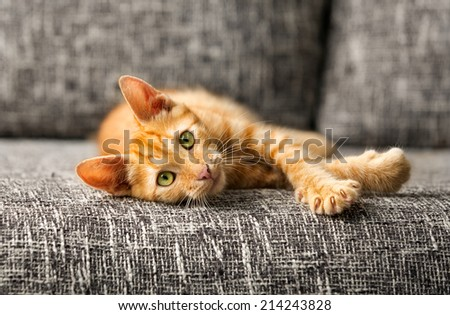 red kitten lying on bed and looking at camera - stock photo