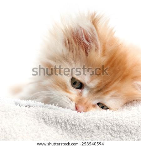 red kitten nestled against a white towel - stock photo
