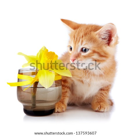 Red kitten. Sitting cat. Red striped kitten with a yellow flower. Kitten on a white background. Red striped kitten. Small predator.