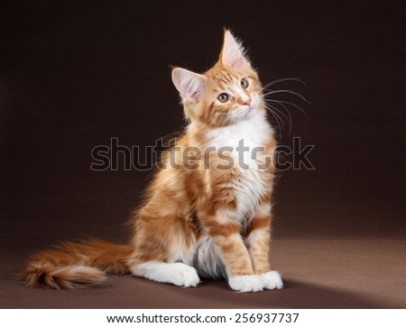 red kitten sitting on a brown background