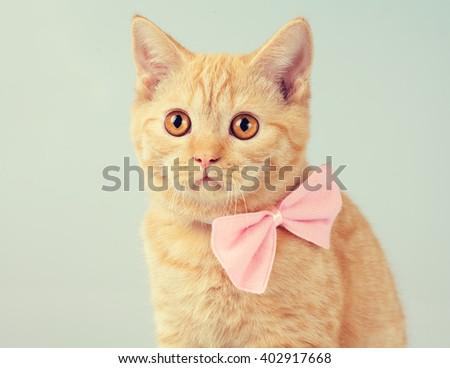 Red kitten wearing bow tie - stock photo