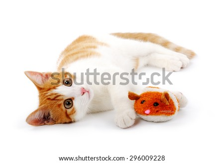 red kitten with mouse - stock photo