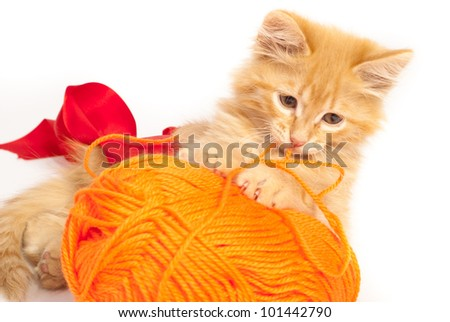 red kitten with orange thread - stock photo