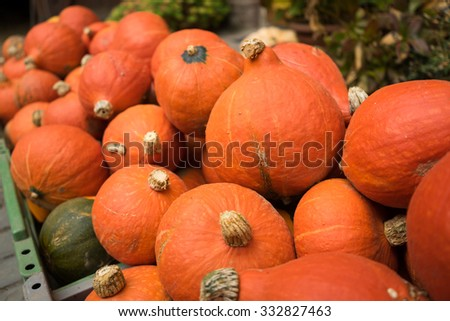Red Kuri Squash Pumpkins in Crate