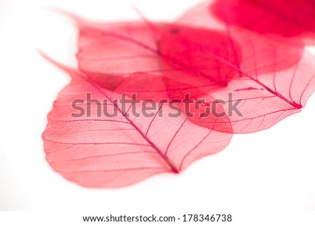 Red lace leaves silhouettes on white background