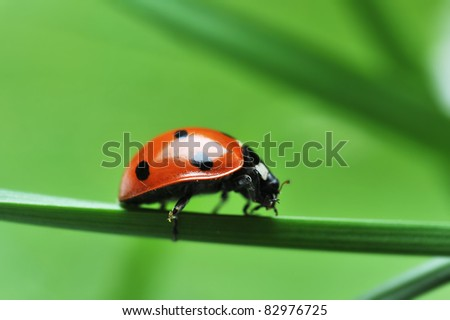 Red ladybird with seven black dots sitting on green grass. Beautiful nature - stock photo