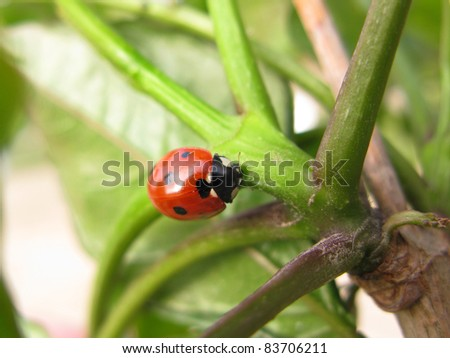Red ladybug close-up over green leaves - stock photo
