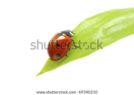 red ladybug on green grass