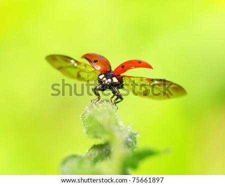 red ladybug on green grass - stock photo
