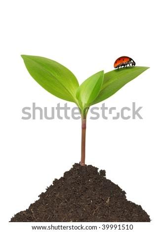 red ladybug on green plant - stock photo